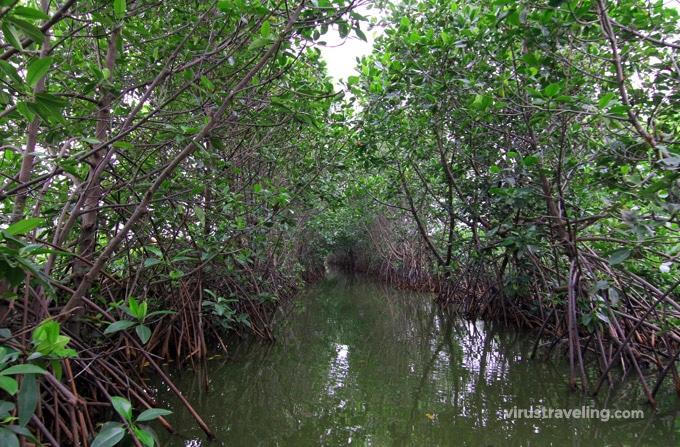 wisata pekalongan mangrove park