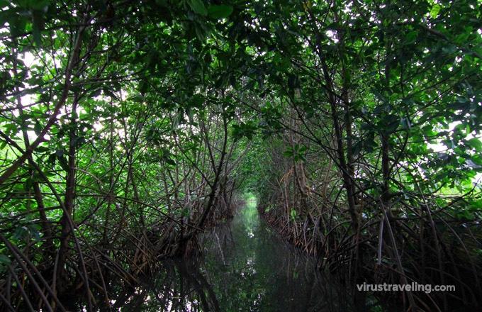Tempat Wisata di Pekalongan Mangrove Park