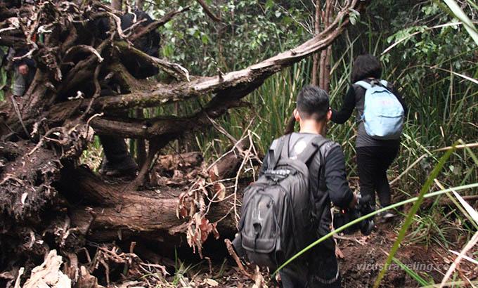 trekking-hutan-taman-nasional-sebangau