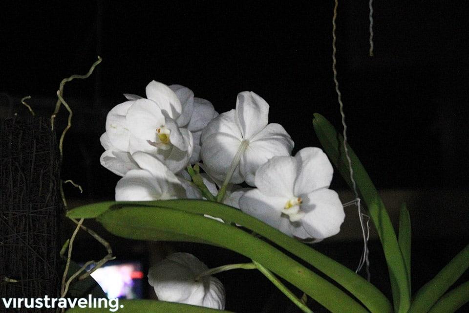 Bunga Anggrek di Kalimantan