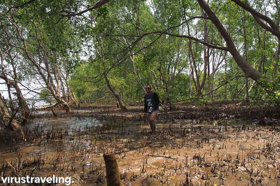 Rawa di Pulau Kaget Sungai Barito