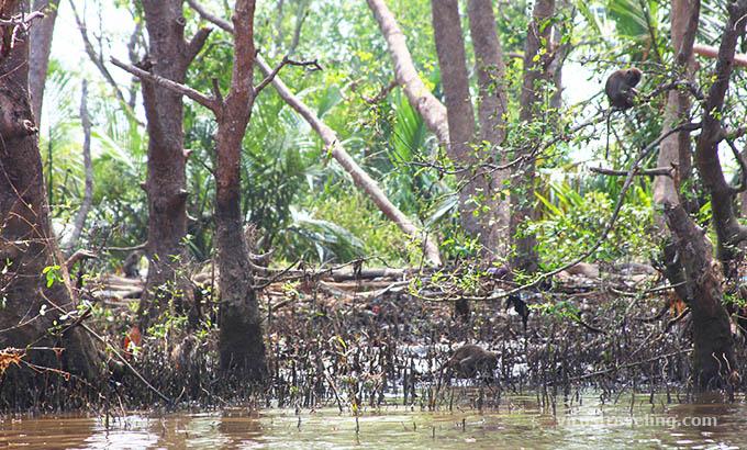 Pulau Kaget Kalimantan