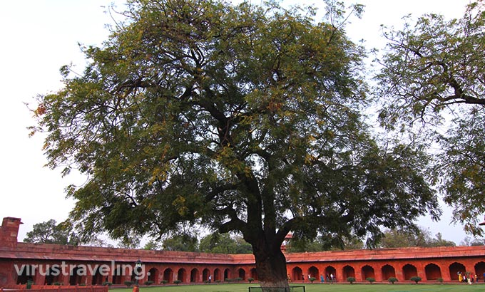 Taj Mahal Forecourt Garden