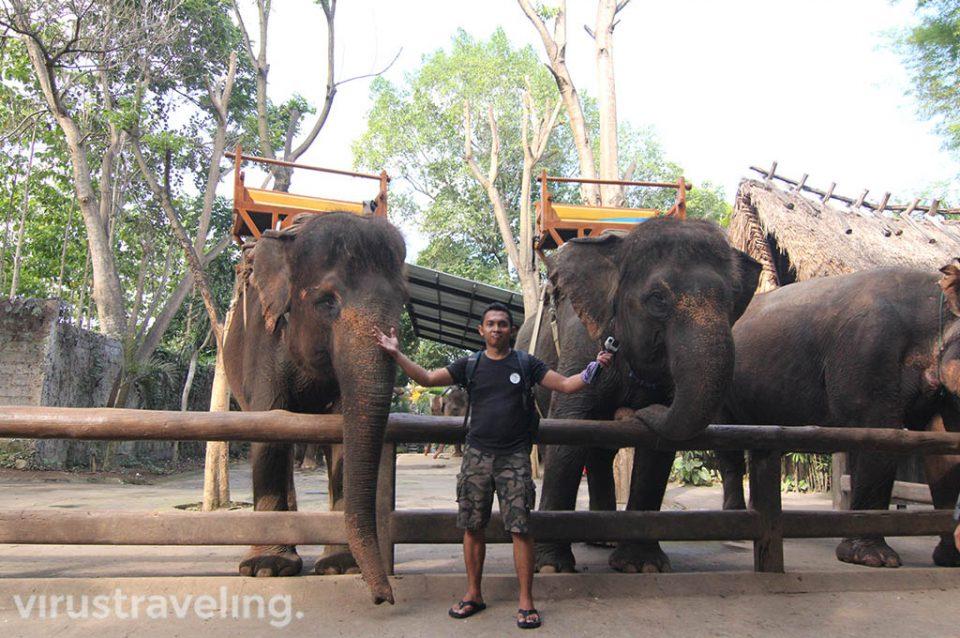 Visiting Bali Zoo Park Gianyar