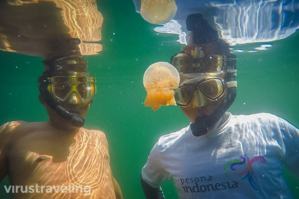 virustraveling wirannurmansyah with stingless jellyfish