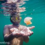 virustraveling with stingless jellyfish