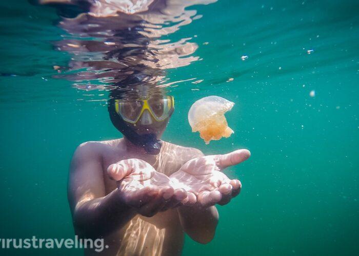 virustraveling with stingless jellyfish