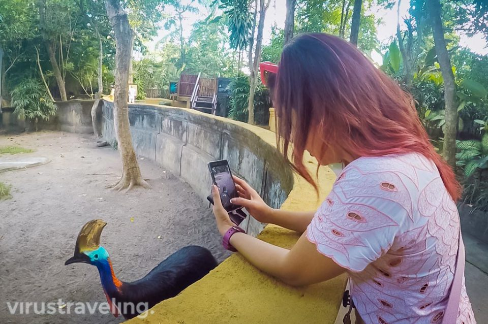 Bali Zoo Activities virustraveling