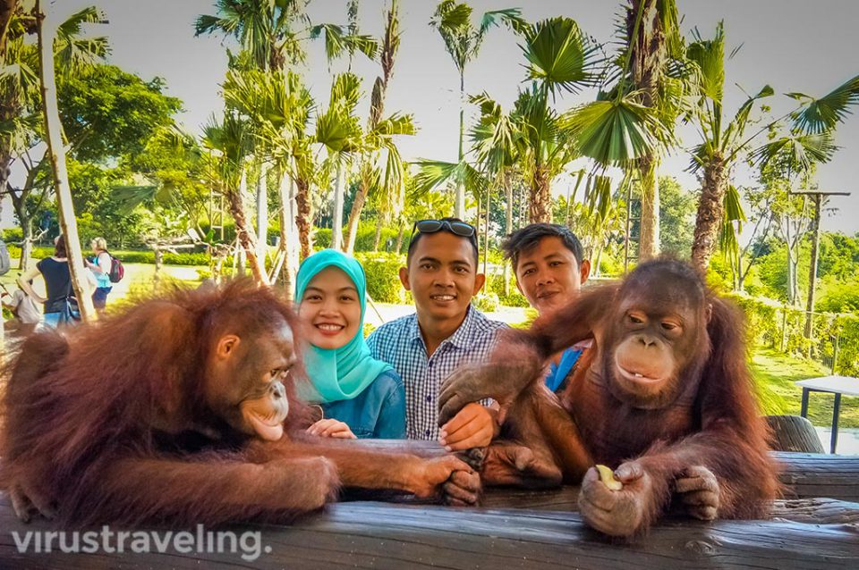Breakfast with orang utan Bali Zoo virustraveling