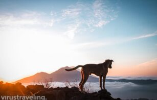 Anjing Kintamani dengan View Sunsire Gunung Batur