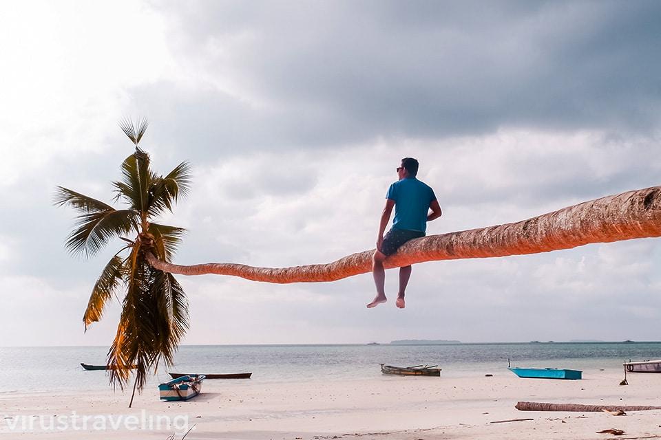 Nangkring diatas pohon kelapa di Pantai Ngurbloat