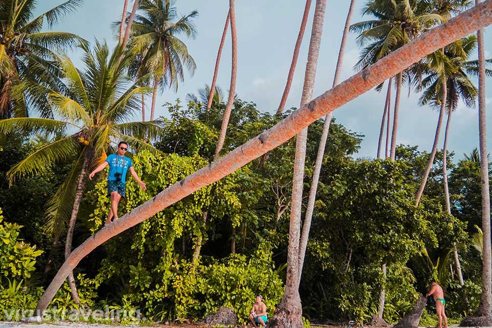Spot pohon kelapa di Pantai Ngurbloat
