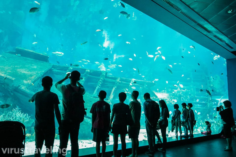 salah satu aquarium di sea aquarium singapore