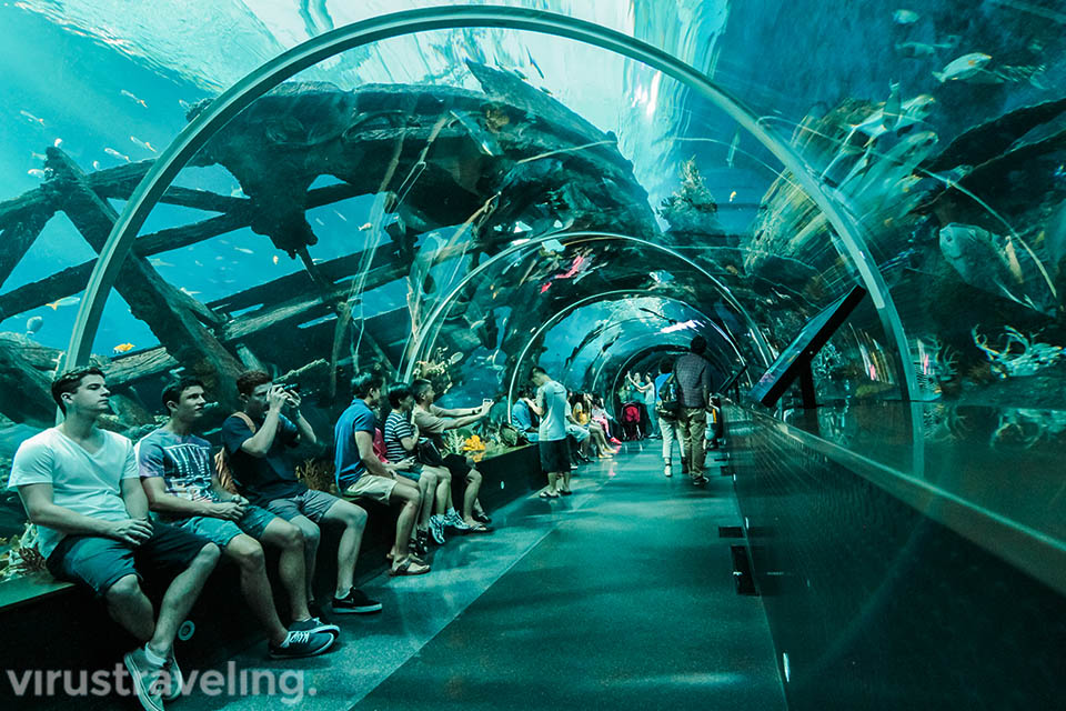 salah satu spot favorit di sea aquarium singapore