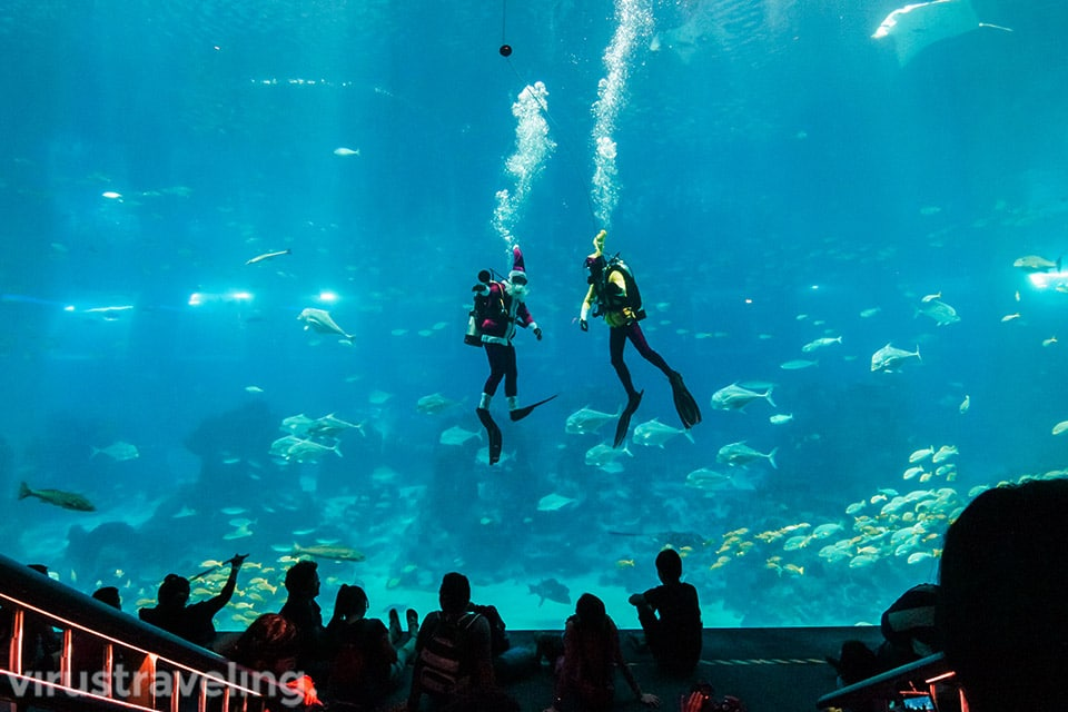 salah satu theater di sea aquarium singapore