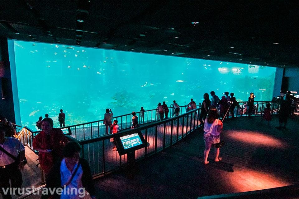 sea aquarium singapore seperti layar bioskop