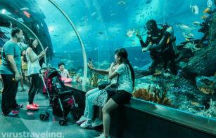 Selfie bareng diver di sea aquarium singapore