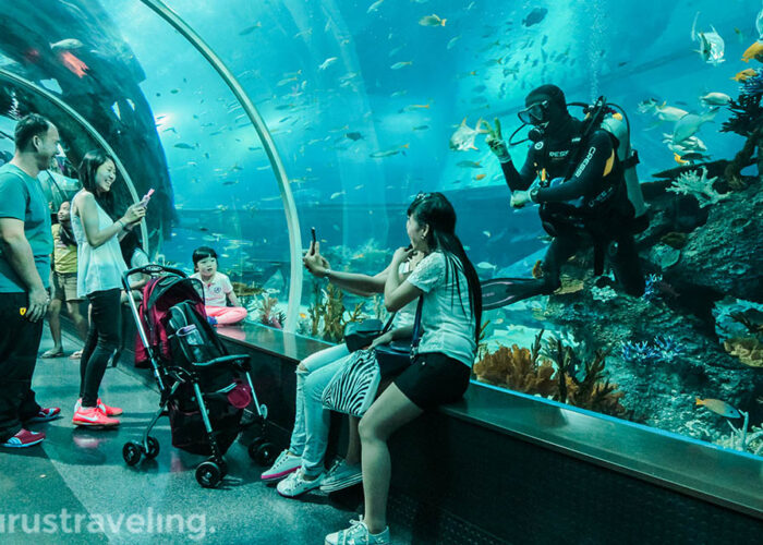 Selfie bareng diver di sea aquarium singapore