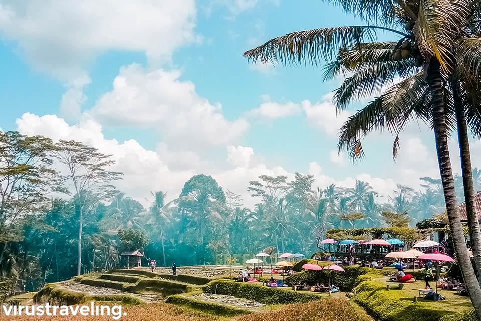 green kubu tegalalang rice field