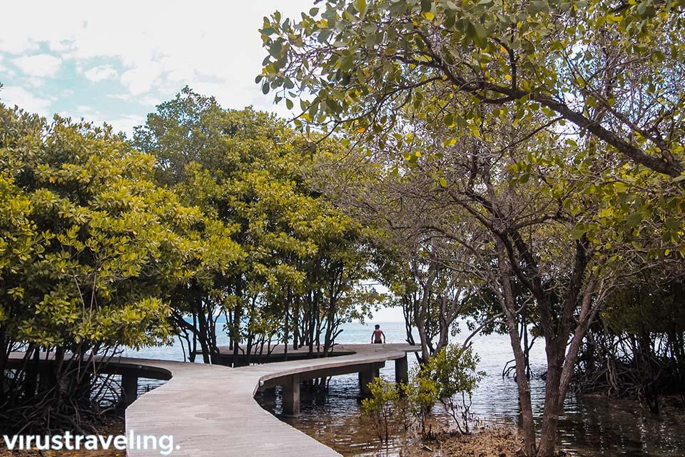 Hutan Mangrove di Plataran Menjangan