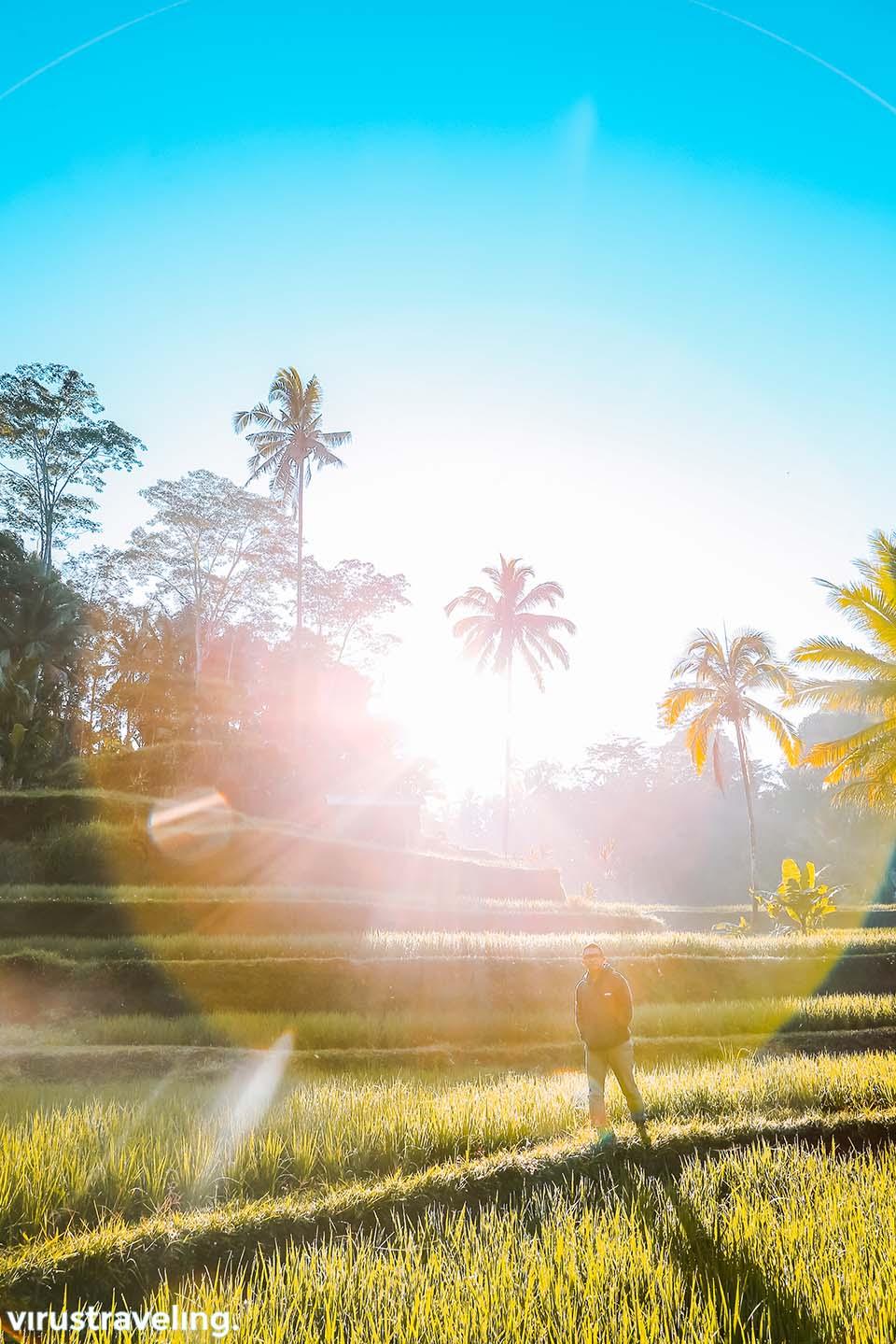 Matahari pagi di Tegalalang Ubud