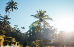 Tegalalang rice fields ubud