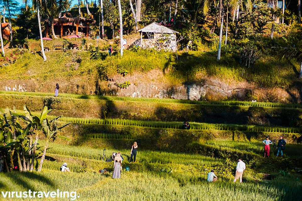 instagrammer di tegalalang rice terrace