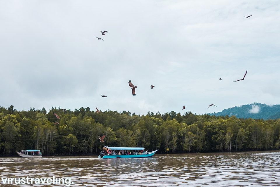 Kilim Geoforest Park, Melihat Ratusan Elang dan Monyet Berenang