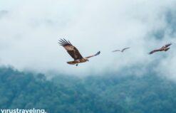 Ratusan elang di Kilim Geoforest Park