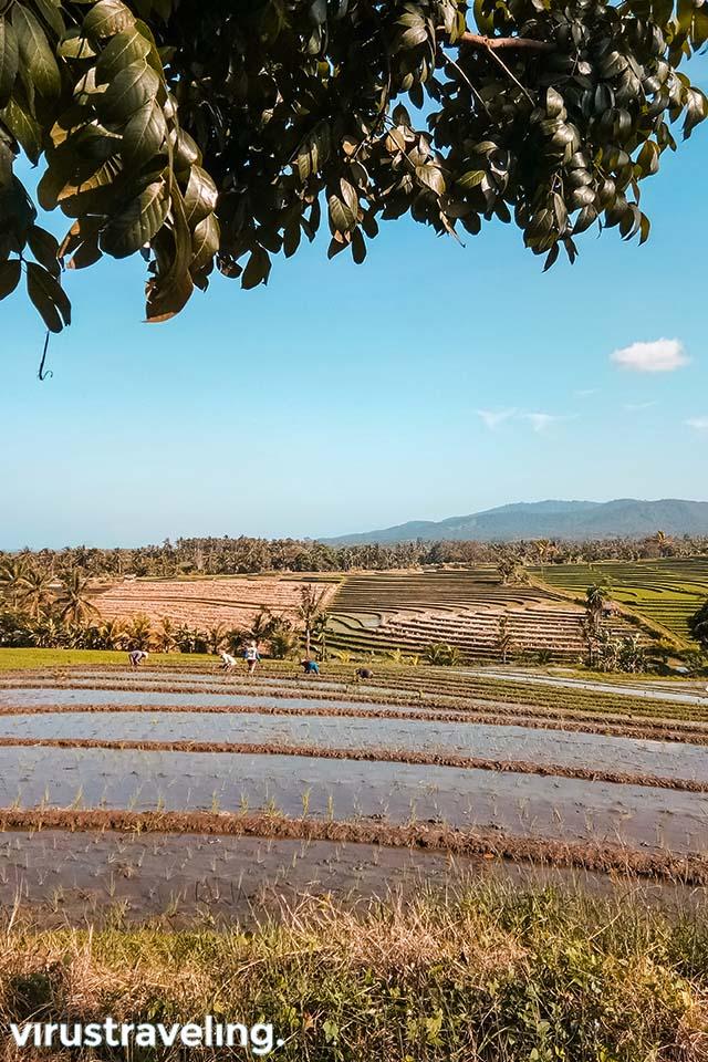 Bukit dan Sawah Terasering di Bali Barat